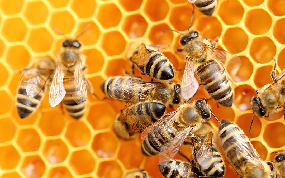 Politik, Wirtschaft und Nachhaltigkeit – das Beispiel Bienen